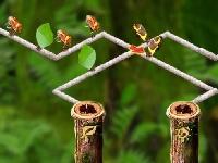 תמונה של מבוך הנמלים