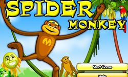 Picture of Spider Monkey